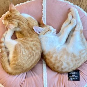 ニャンズ(猫たち)の寝姿♡