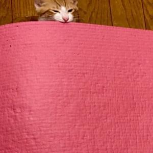 ニャンズ(猫たち)はYOGAマットがお気に入り