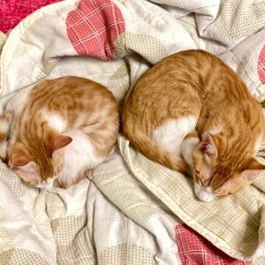 ニャンズ(猫たち)LOVE♡逆キャイーン