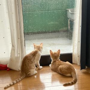 ニャンズ(猫たち)初めての大雨&雷☆盆迎え