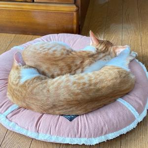 おじいちゃん無事に手術終了☆ニャンズ(猫たち)LOVE♡仲良くねんね