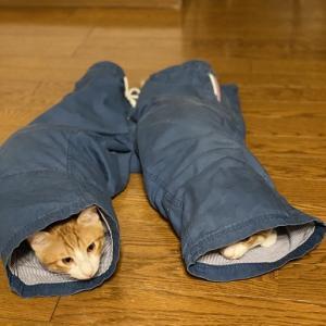 ニャンズLOVE♡お父さんのズボンが好き