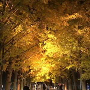 昭和記念公園は12月のイルミネーションから秋の夜散歩へ。