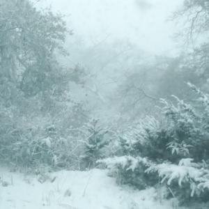 今年初の雪搔きでした