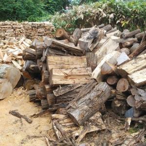プラタナスの原木がやっと片付いたと思ったらまた来たのです。