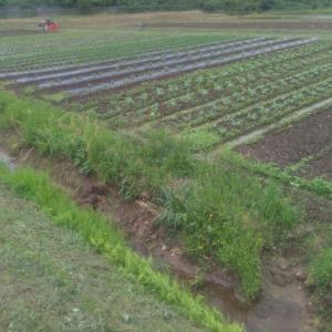 京都府大丹波地方菜園6月上旬、草刈りと抜き取りをする
