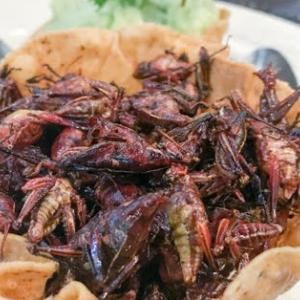 確かにメキシコの伝統料理が食べたいとは言ったけど・・・