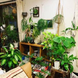 観葉植物の冬配置