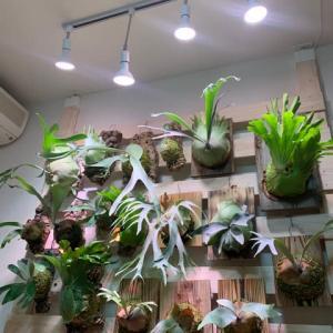 IKEAの植物育成ライト💡がキタ!!!✧*。٩(ˊᗜˋ*)و✧*。