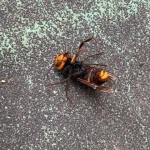 蜂の巣を駆除