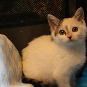 まだ子猫の保護はつづきます 新しい保護っ子・・桜子&佐助です