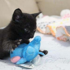 年末に多頭飼育現場からレスキューした乳飲み子&お見合い会参加猫の紹介です