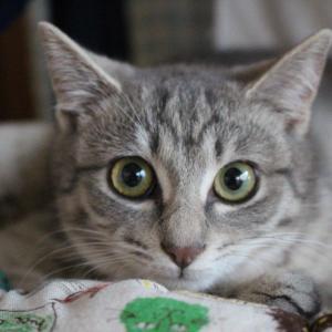 我が家のスシ郎自慢・・可愛さ満点です&お見合い会参加猫の紹介です