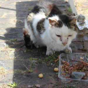 寒空の中・・頑張って生きてる地域猫達 強くて健気で愛おしいです