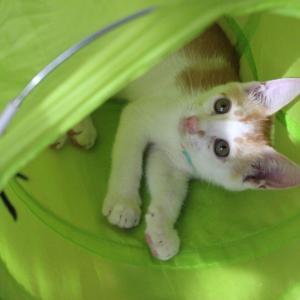 幸せっ子誕生・・トタン君は栗斗君になりました・・緊急 親子猫の捕獲