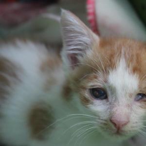 毎日の病院通いは疲れます&子猫の保護が止まりません