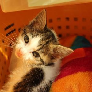 この時期 子猫の体調管理は大変です&垂水区でのお見合い会情報です