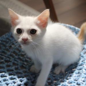 クリームコロンの幸せ譲渡編&衰弱した子猫3匹の緊急保護編