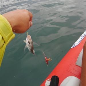 浅場の小物釣り