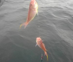 錦江湾 サメばっかやね