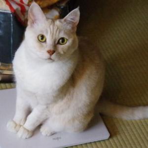 過去ブログより ☆ネコさんに躾けられる私?!