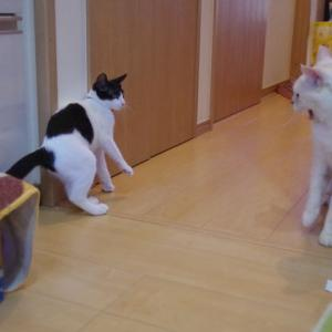 ☆子猫パミは遊びたいだけ♪