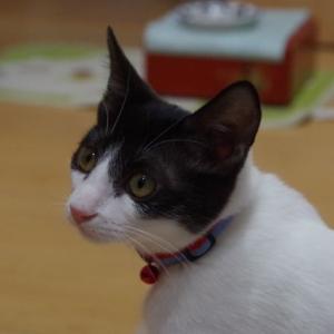 ☆子猫パミを監視するミルクん♪