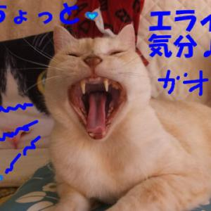 過去ブログより ☆ネコさんは、ちょっとでも高い所好き♪