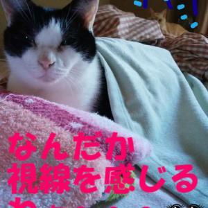 過去ブログより ☆寒い時の猫♪