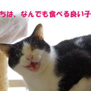 過去ブログより☆好きなものから食べるタイプ?