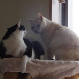過去ブログより☆ネコたちの攻防!