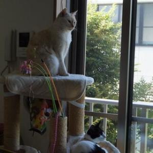 ☆壊れたネコタワーのその後とネコたち