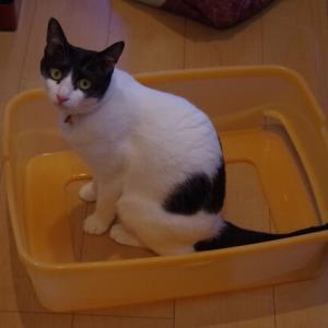 ☆ネコのトイレは・・・