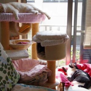 過去ブログより☆ネコのいる風景LOVE2~ありがたい生き物♪