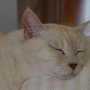 ☆癒されるミルクんの寝顔