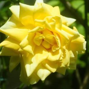 初夏の花に癒されて
