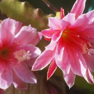 庭に咲く初夏の花