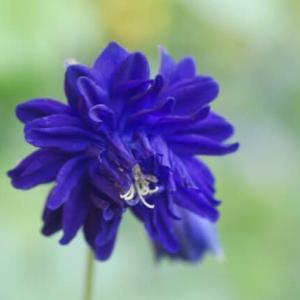 ありふれた庭の花