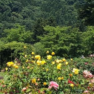 福の島の自然~バラ園