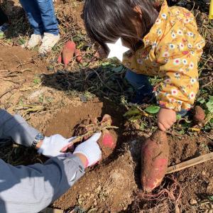 芋掘りイベント