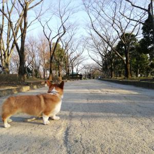 草加公園〜DOG DEPT、2月のこと。