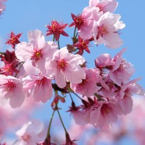 変化の春は楽しく乗り越える!心身ともに健康です!