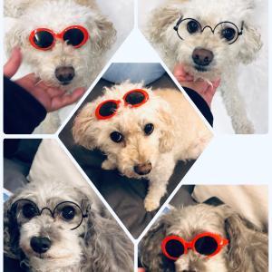 ペット用メガネを…