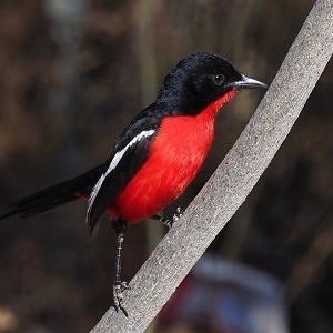 鳥のカラーコーディネート
