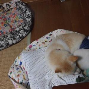 しんきちベッド洗うよ~