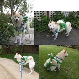 犬の島🐕GO TOキャンペーンで2泊奮発