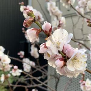 花粉症の悪化は毎日の食事に原因? 対処方法は?