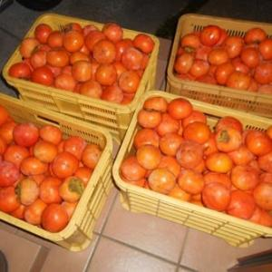 柿食えば鐘が鳴るなり長保寺