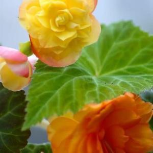 目にやさしい花