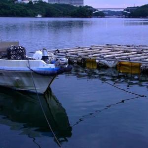 真珠養殖筏